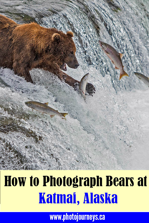 Photographing Bears at Katmai, Alaska blog PIN on Photojourneys.ca