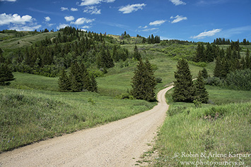 Battle Creek Road, Cypress Hills, Alberta