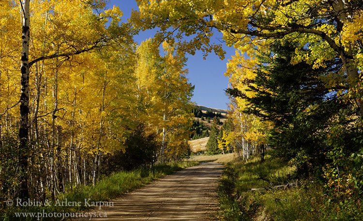Fall along the Battle Creek Road, Cypress Hills, SK