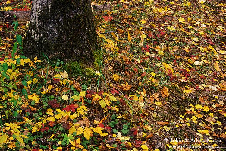 Leaves on forest floor, Prince Albert National Park, Saskatchewan