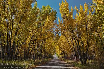 Cottonwoods, Saskatchewan