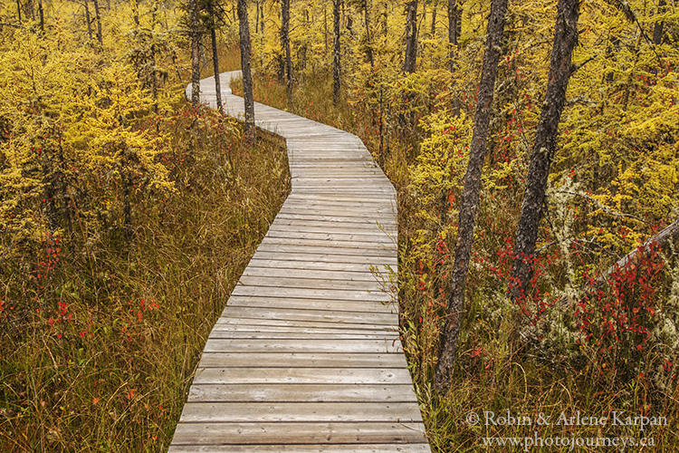 Boundary Bog Trail, Prince Albert National Park, Saskatchewan
