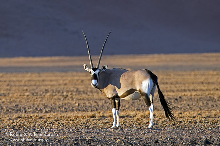 Gemsbok, Namib-Naukluft National Park, Namibia www.photojourneys.ca