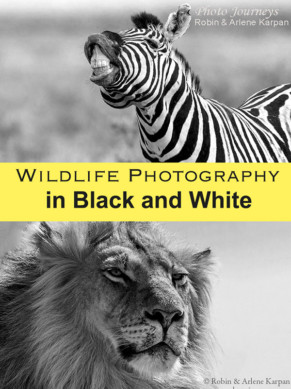 PIN for blog posting on Wildlife Photography in Black and White