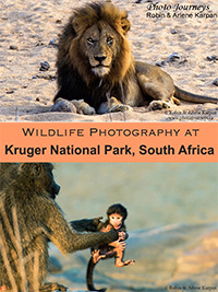 PIN for blog posting on www.photojourneys.ca on Wildlife Photography at Kruger National Park, South Africa