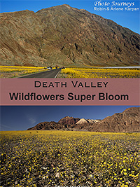 PIN for blog posting on Photojourneys.ca Death Valley Wildflowers Super Bloom