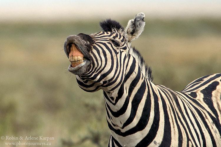 Zebra in Etosha National Park, Namibia.