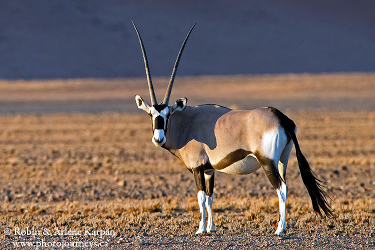 Gemsbok, Namib-Naukluft National Park, Namibia