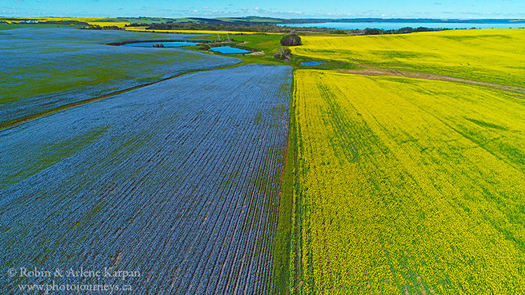 Flax and canola, Saskatchewan