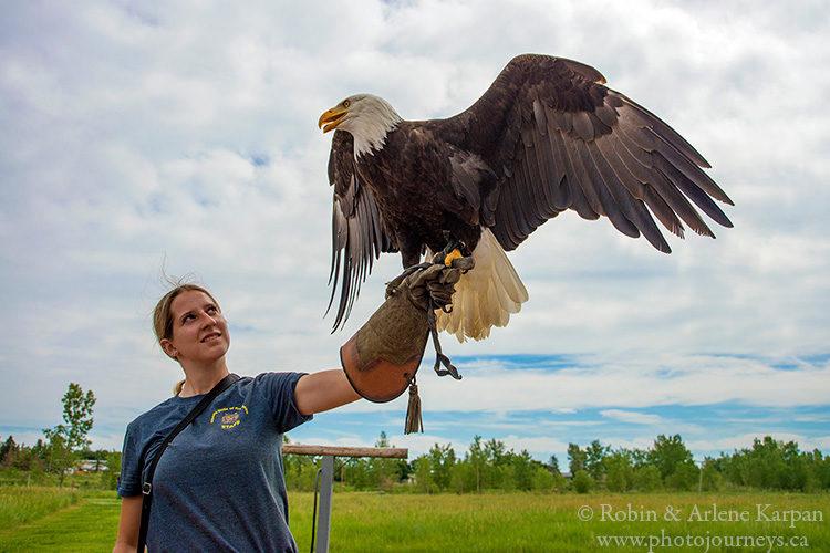 Alberta Birds of Prey Centre, Coaldale, AB