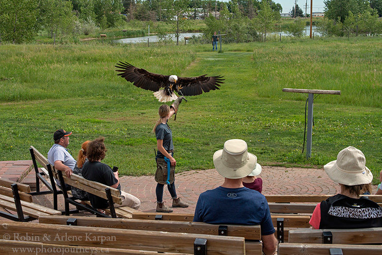 Alberta Birds of Prey Centre, Coaldale, AB