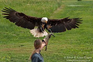 Alberta Birds of Prey Centre