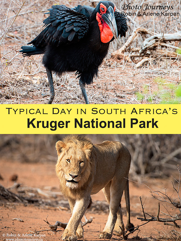 A Typical Day in Kruger National Park, South Africa blog posting