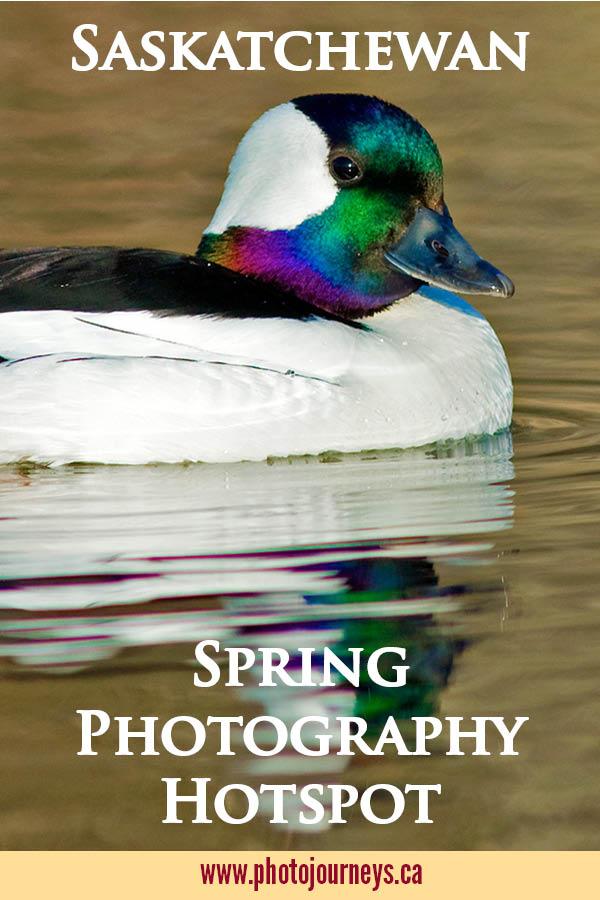 PIN for Springtime Birds