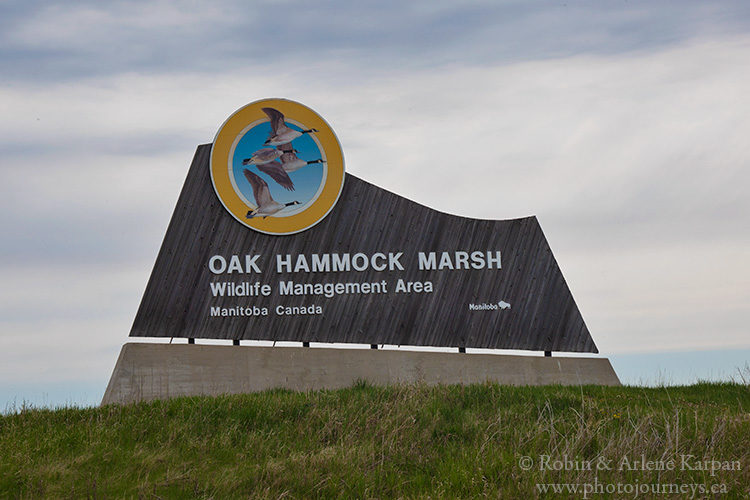 Oak Hammock Marsh near Winnipeg, Manitoba
