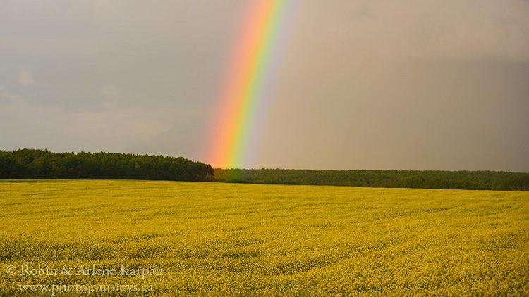 Canola field and rainbow, Saskatchewan