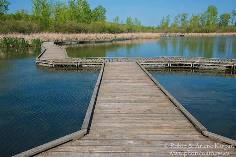 Wetland boardwalk Fort Whyte Alive, Winnipeg, Manitoba