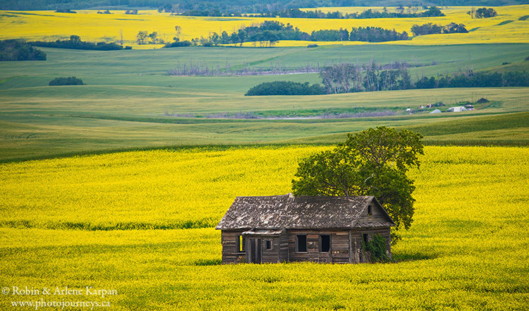 Canola field near Redberry Lake, Saskatchewan