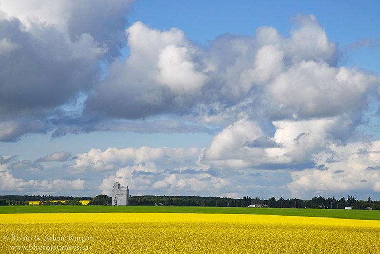 Canola field at Rabbit Lake, Saskatchewan
