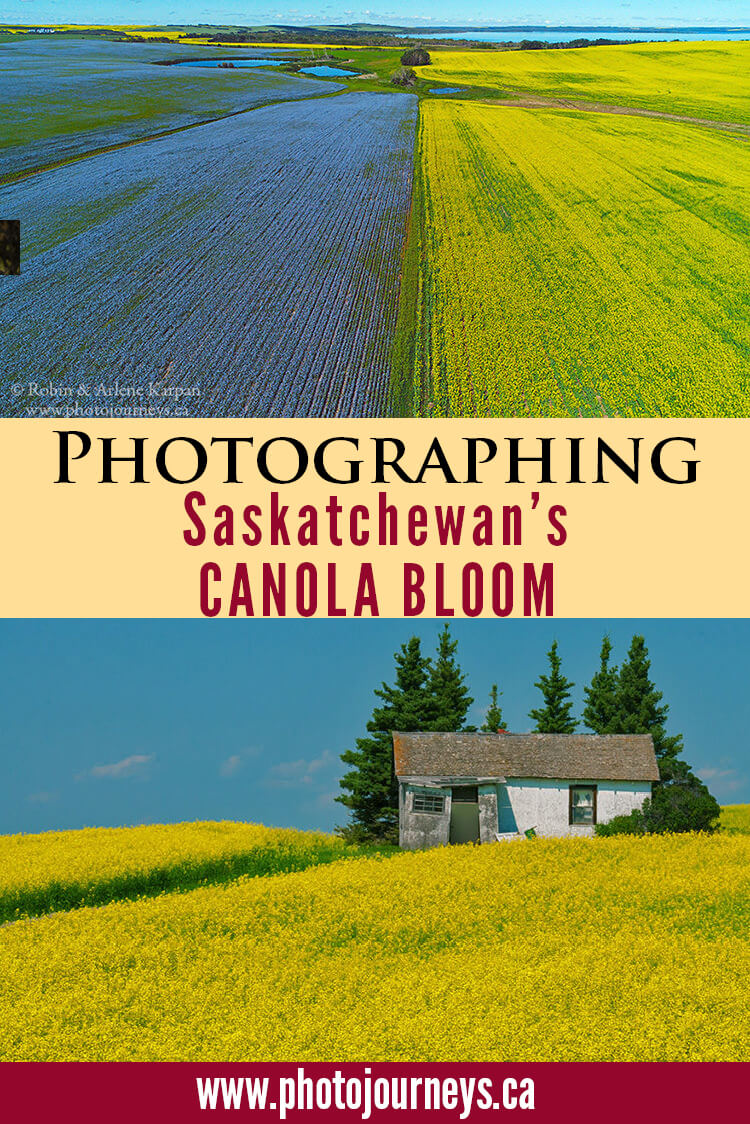 PIN for canola bloom post on Photojourneys