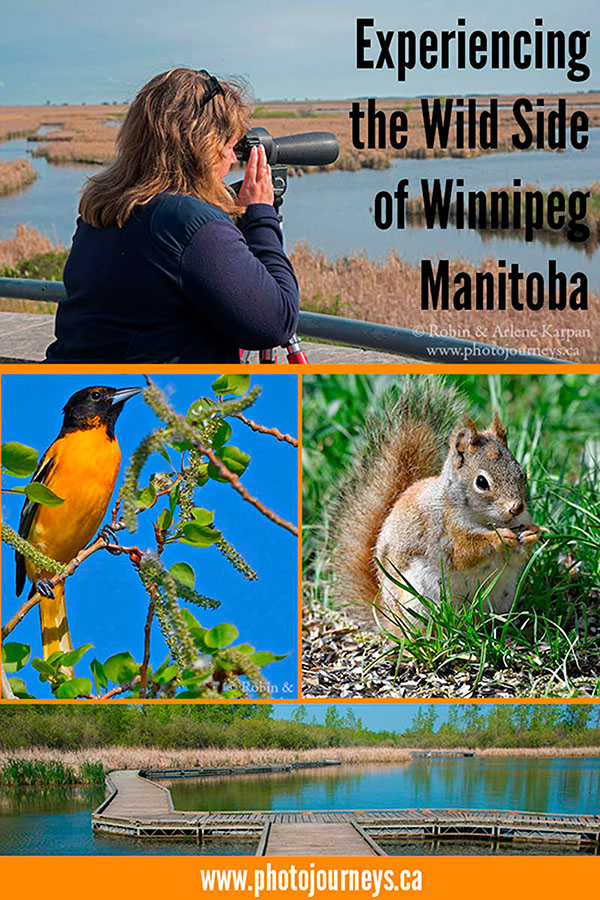 PIN for Experiencing the Wild Side of Winnipeg blog post on Photojourneys.ca
