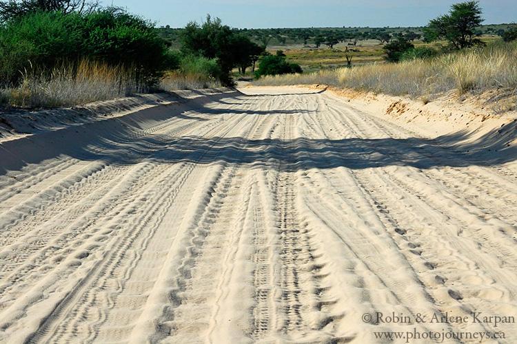 Corrugated sand road, Kalahari Desert