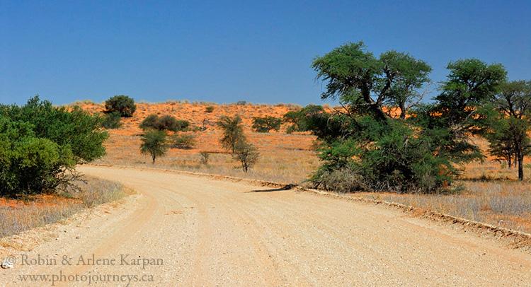 Kalahari Desert, red dunes