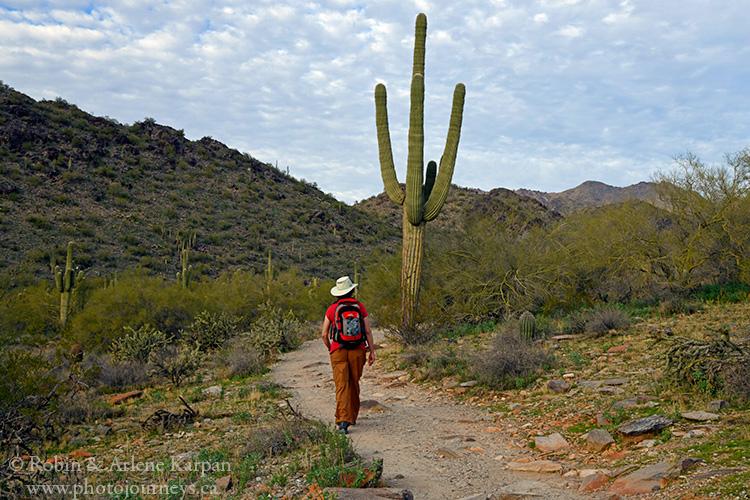 Trail in the McDowell Sonoran Preserve, Phoenix AZ