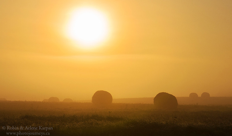 Hay bales in early morning fog, southern Manitoba.