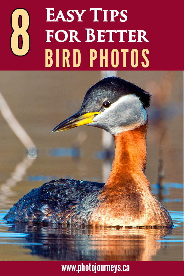 PIN for Bird Photography
