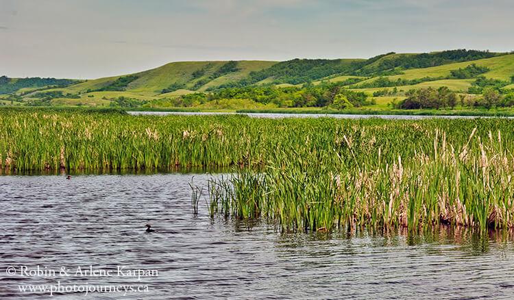 Nicolle Flats Marsh, Buffalo Pound Provincial Park, Saskatchewan