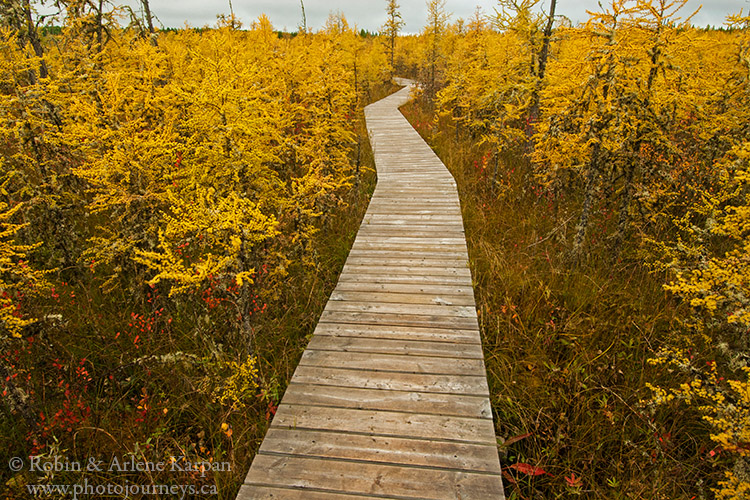 BBoundary Bog Trail, Prince Albert National Park.