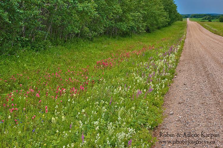 Flowers, Thickwood Hills, Saskatchewan