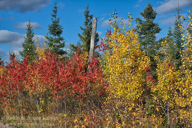 Narrow Hills Provincial Park, Saskatchewan