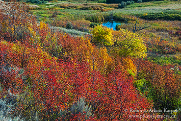 Saskatchewan Landing Provincial Park, fall colours