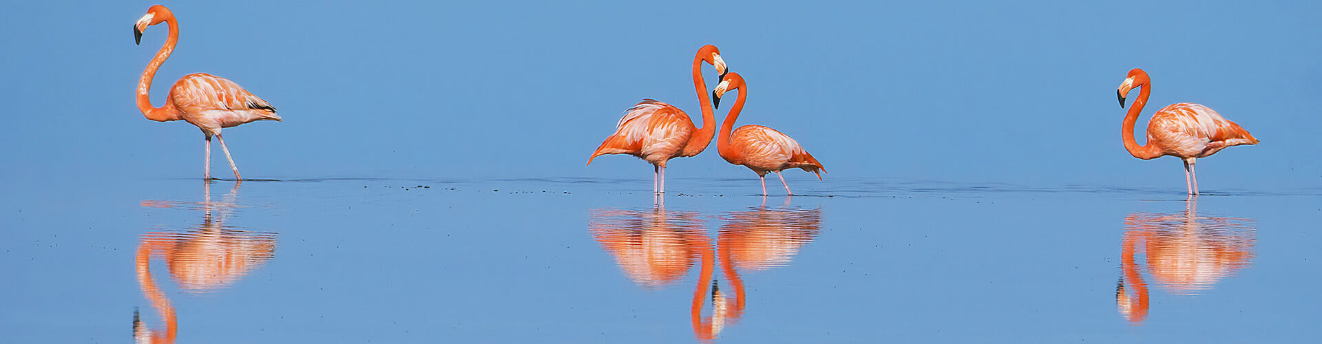 Flamingos, Mexico