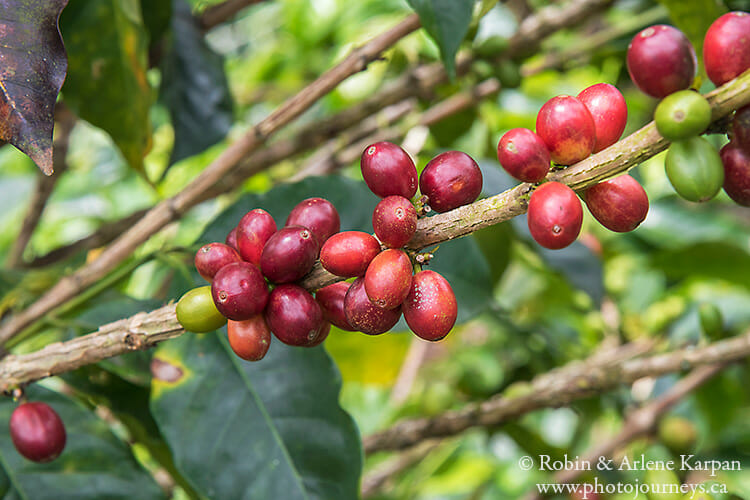 coffee beans, Colombia