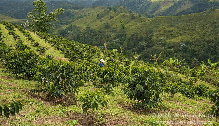 Coffee farm near Filandia, Colombia