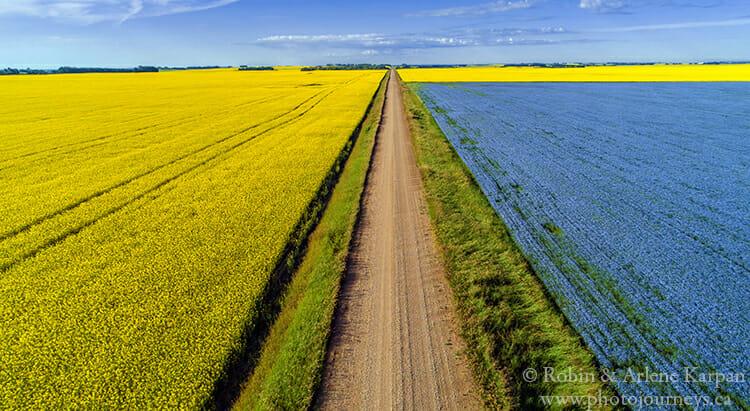 Canola and flax, Saskatchewan