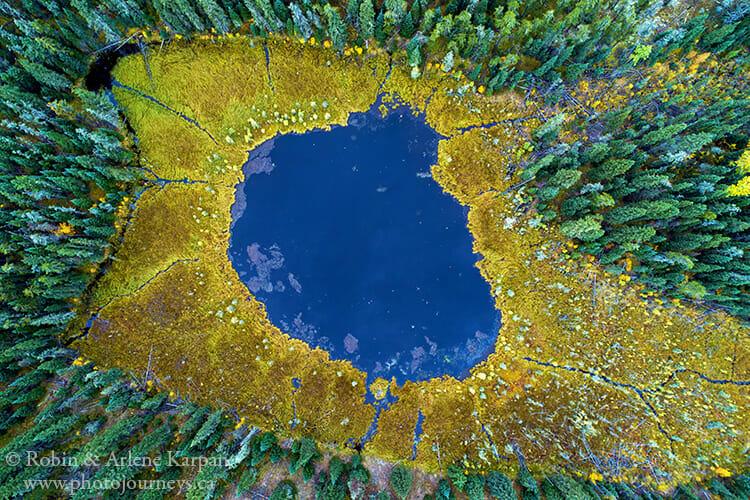 Bog, Narrow Hills Provincial Park, Saskatchewan