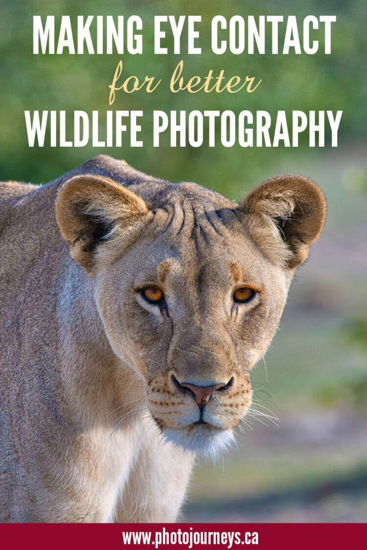 PIN for Eye Level Wildlife Photography