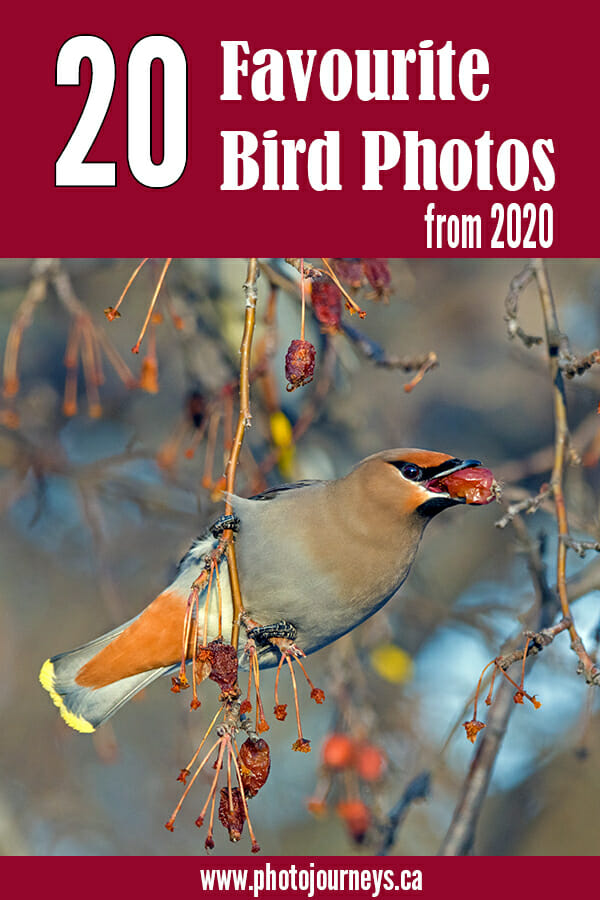 PIN for 20 Favourite Birds 2020