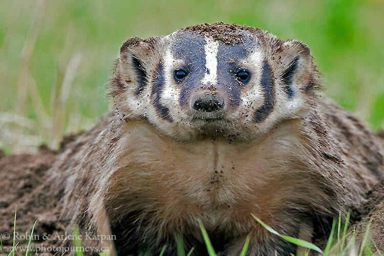 Badger, Saskatchewan