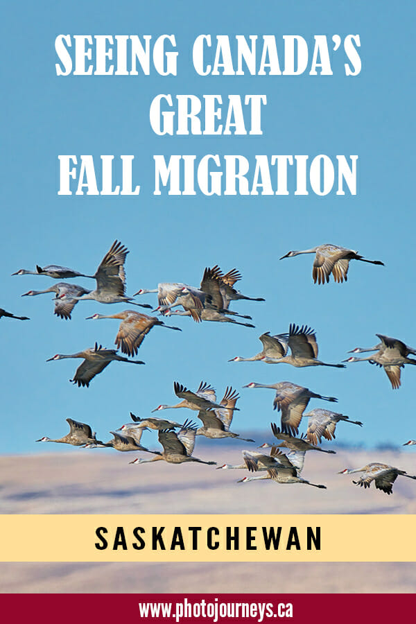 PIN for Fall migration