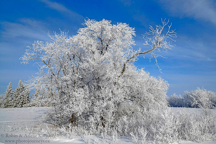 Hoarfrost on trees in winter.