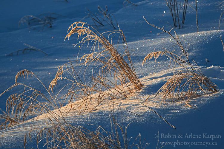Frost on grass, Saskatchewan, Winter photography