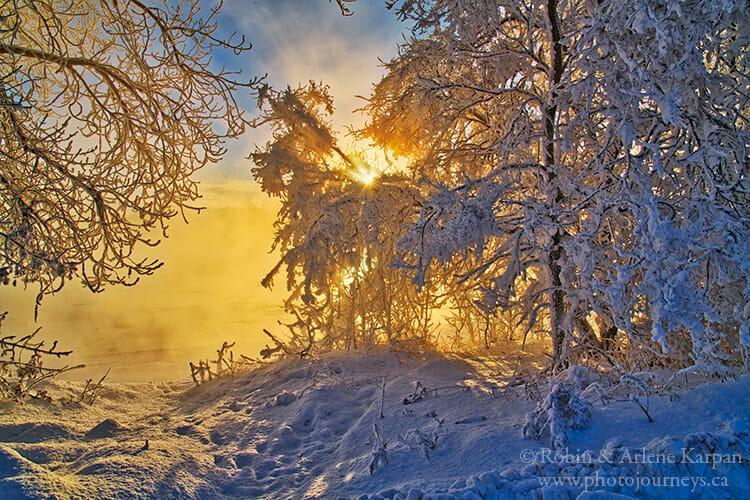 Saskatoon riverbank in winter