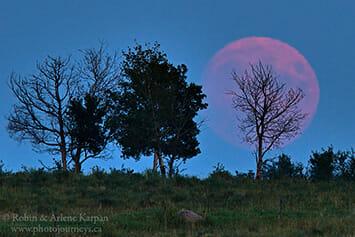 Moon rise in smoky conditions, Saskatchewan