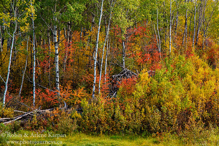 A cloudy day allows us to see detail in the forest, Thickwood Hills, Saskatchewan.