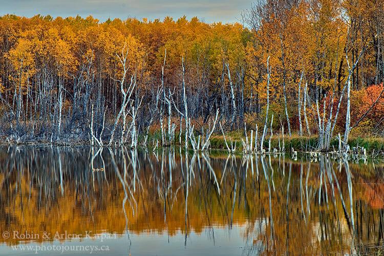 Wetland in the Thickwood Hills, Saskatchewan.